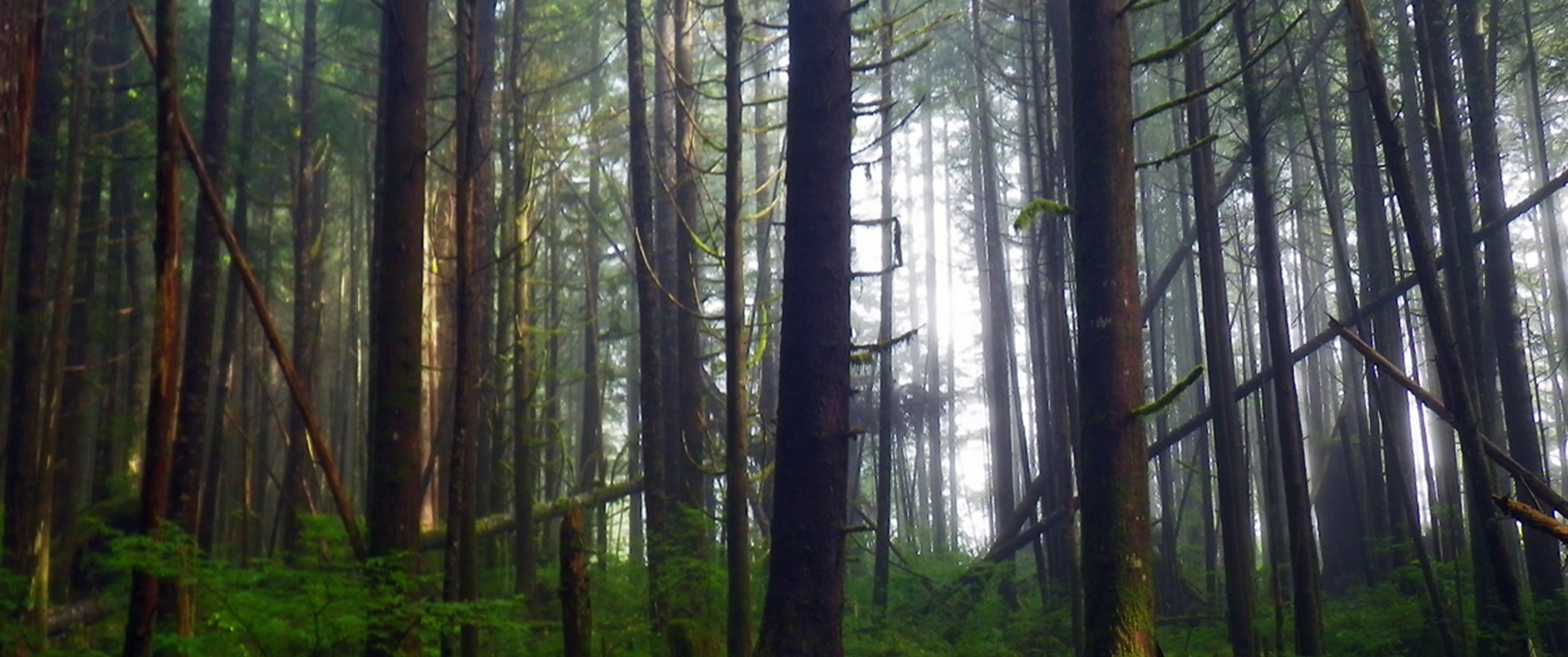 Forest Wealth Coastal First Nations